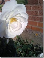 flor-tumblr-facebook-56