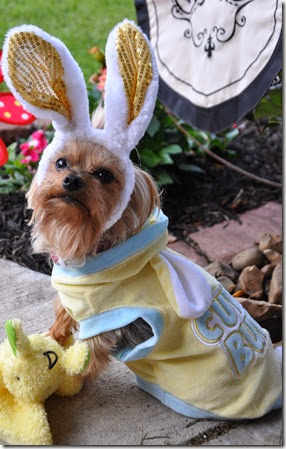Puppy Easter Bunny (2)