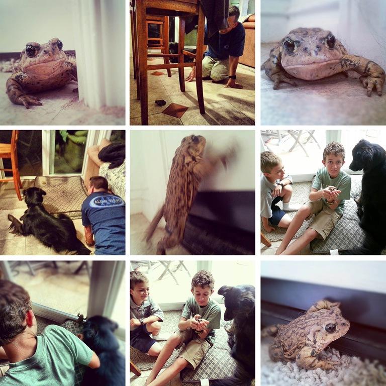 [toad4.jpg]