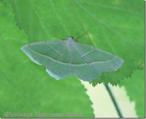2-light-emerald