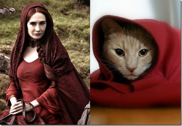 cats-game-thrones-7