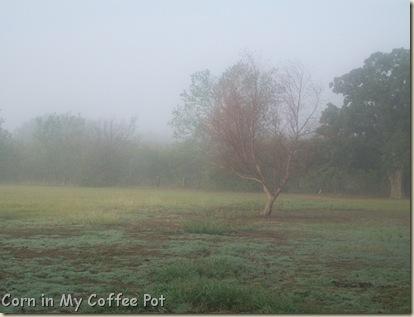 Oct 24 2011- fog pix 129