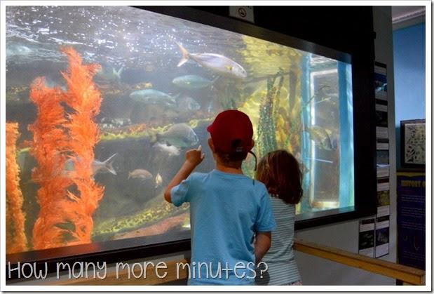 How Many More Minutes? ~ Seahorse World at Beauty Point, Tasmania