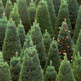 Navidad%2520Fondos%2520Wallpaper%2520%2520471.jpg