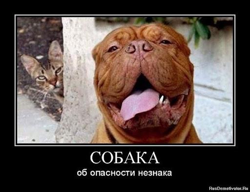 Собака всяка разняка