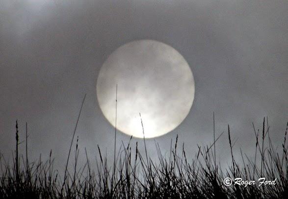Sole nebbia