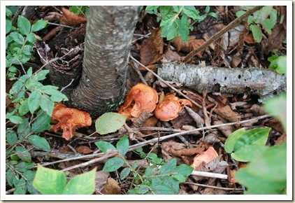 fungus 9