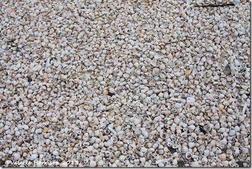 26-shells