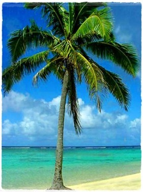 palm_tree-11931