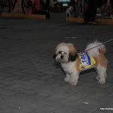 Pet Express Doggie Run 2012 Philippines. Jpg (11).JPG