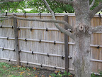 Each side of the walled in Japanese garden uses a different style of traditional Japanese fence. There's this one,