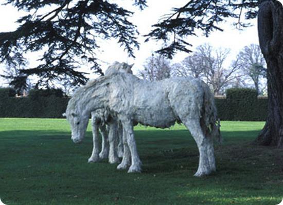sally matthews horse