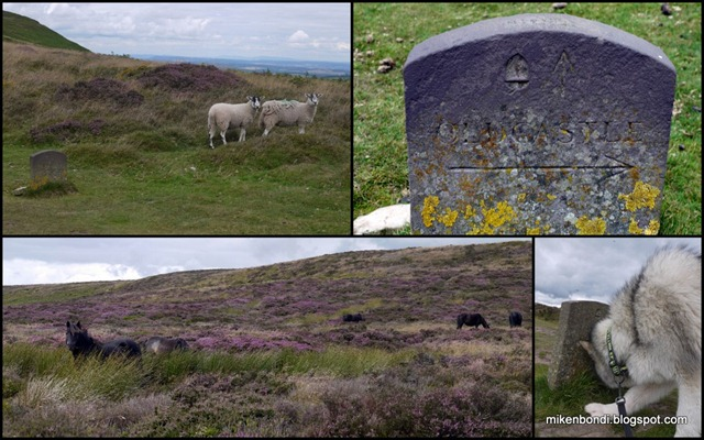 Ponies, sheep and signposts