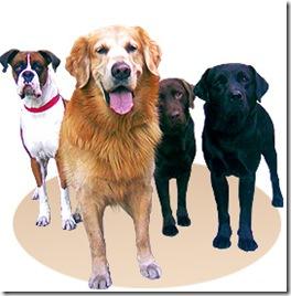 Nuevas fechas de esterilizaciones quirúrgicas gratuitas para caninos