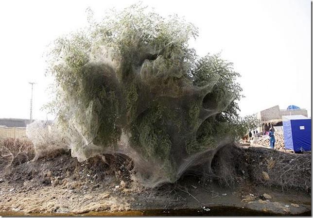 paquistao-aranhas-arvores-630-3_143609