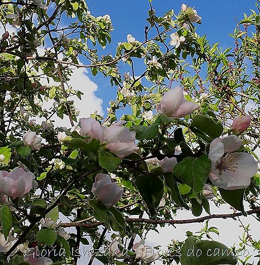Glória Ishizaka - flores - 9