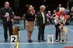 20130510-Bullmastiff-Worldcup-1071.jpg