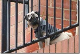 Ansiedad por separacion, perros