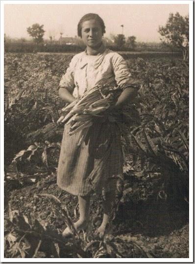 Recogiendo cardos en la huerta. Ca. 1950