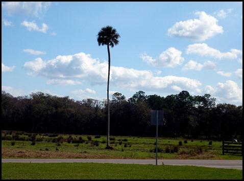 02e - Colt Creek State Park - lone palm