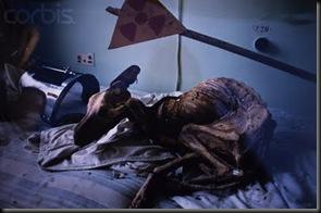 chernobyl-dog