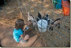 janie with goats 2