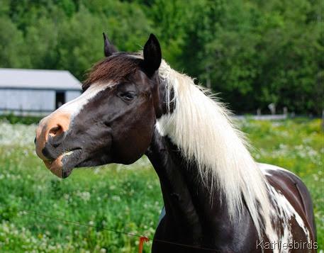 1. horse-kab
