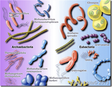 archaebacteria_vs_eubacteria