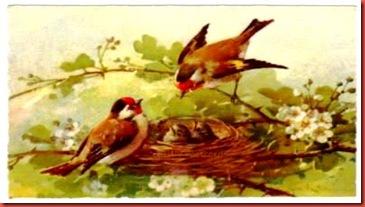 Passarinhos no ninho, cartão postal, Alemanha, década 1920