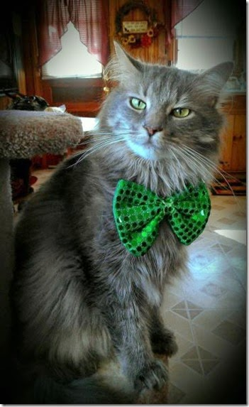 animals-st-paddys-day-005