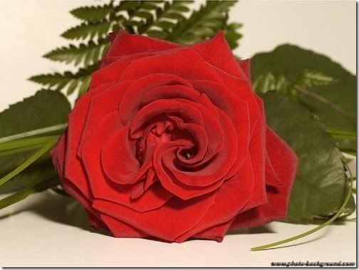san valentin flores (24)