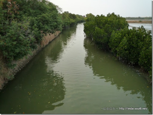 綠色隧道-紅樹林自然保護區