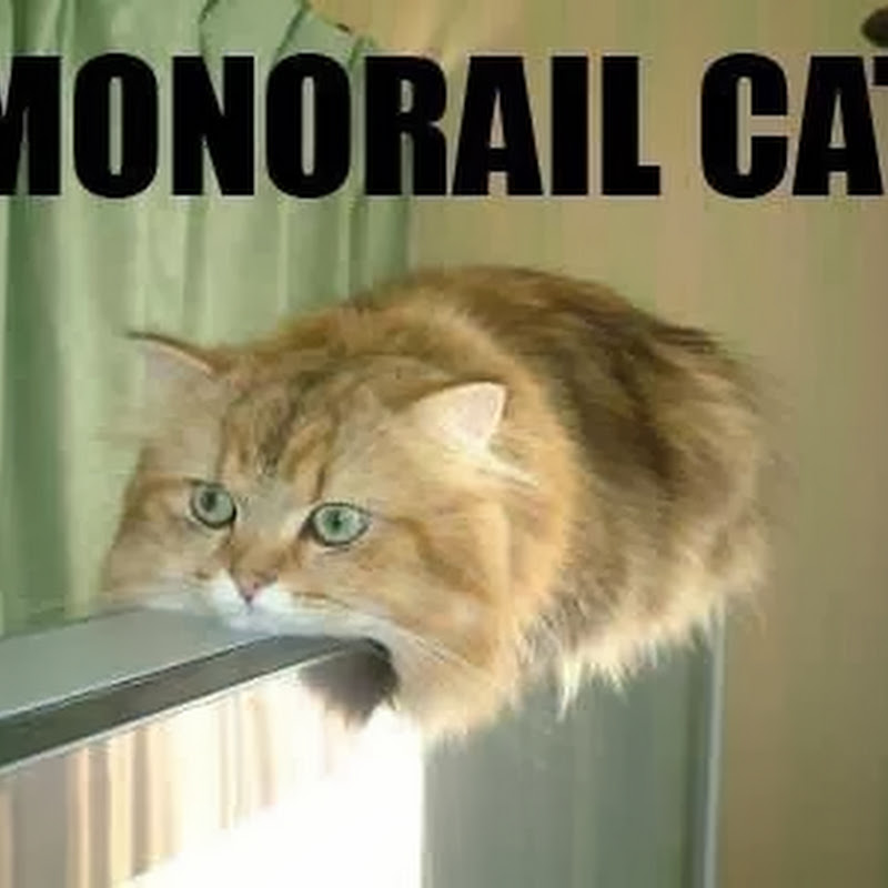 Kucing Monorail