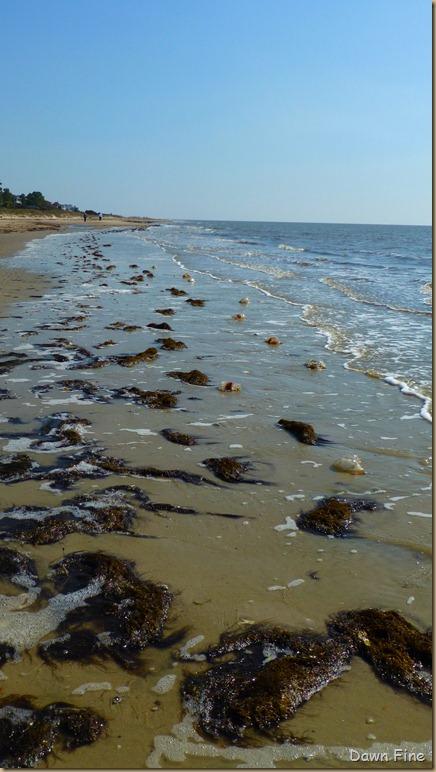 edisto beach_051