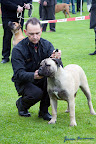 20100513-Bullmastiff-Clubmatch_30897.jpg
