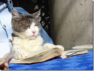 GAto-lendo-livro