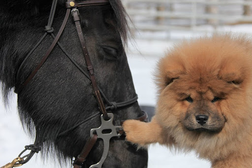 Martha's pup Ghenghis Khan (G.K.) is all for helping horses in need. Here he is getting to know one of Martha's horses, Rinze, a little better.