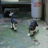 興奮して猫、追いかける