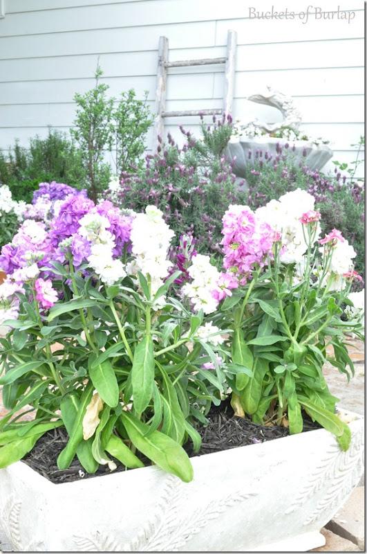 spring garden 2013-2