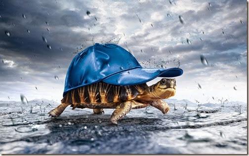 humor tortugas (36)