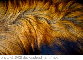 'Dog Fur' photo (c) 2009, davidgsteadman - license: http://creativecommons.org/licenses/by/2.0/
