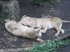 At Ueno zoo!!!