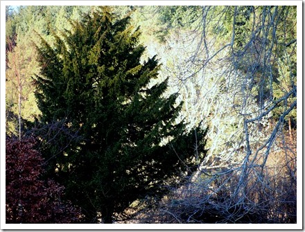 18 Dec 3 15-12-2011 14-37-21