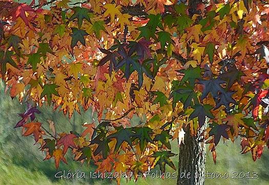 10  Glória Ishizaka - Folhas de Outono 2013
