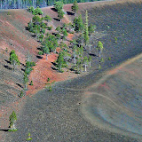Little forest starting to grow inside the rim of the Cinder Cone