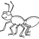 hormiga-2.jpg