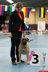 20130511-BMCN-Bullmastiff-Championship-Clubmatch-1698.jpg