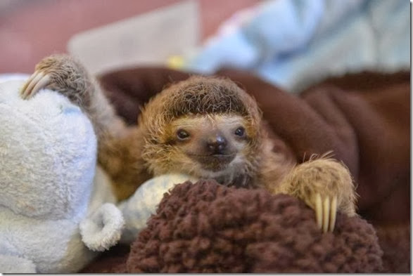 cute-baby-animals-30