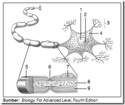 struktr sel saraf_zonabiokita