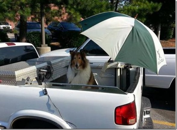 awesome-pet-owners-9